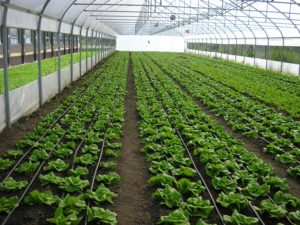 15-2_10_2007-salata-e1446577198248