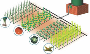 drip_irrigation_model1